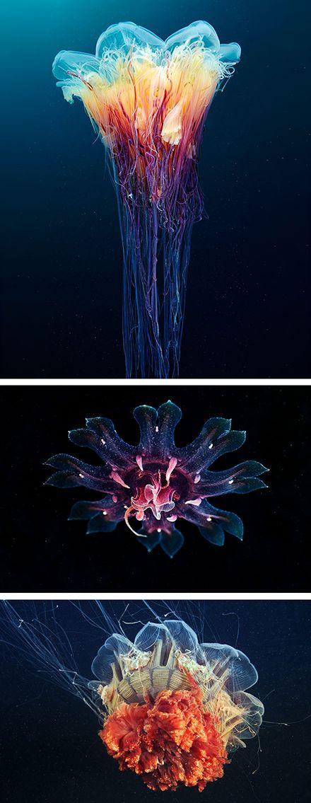 Jellyfish appear like beautiful aliens in Alexander Semenov's photos.