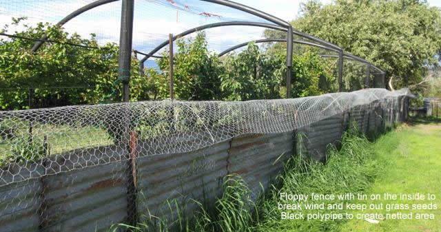 The floppy fence is a type of fence designed to primarily keep possums, wallabies and possums (and other undesirables) out of your food garden. We're a fan of this low-tech, effective system which can be easily replicated in most contexts. What materials do you need? The material list is fairly straight forward and easy to source, it includes chicken wire (rolls at either 1.8m high or two rolls at .9m high), star pickets (at least 1.8m high), tie wire, high tensile wire and vermin mesh or…
