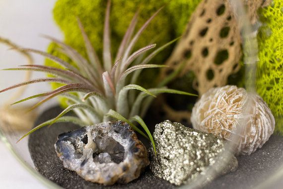 Hanging Terrarium Kit with Air Plant Geode Pyrite & Desert