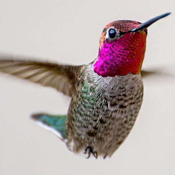 California based, but Minnesota born, singer Tracy Johnson has a secret. Not only is she an accomplished musician, but hummingbirds find her irresistible. How many times has a hummingbird landed on your hands? The same number of times that you've won the lottery? Thought so. But whether it's her siren song, or the bird feeder in her hands, something about Johnson makes the tiny birds unable to stay away.