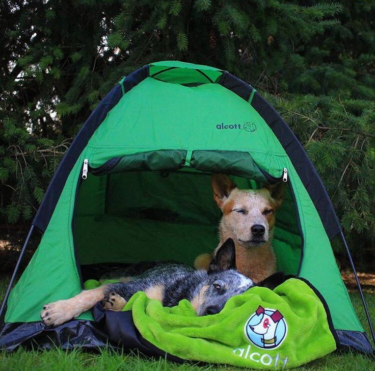 Inspiring The World To Go Camping With Dogs 174 And Hiking