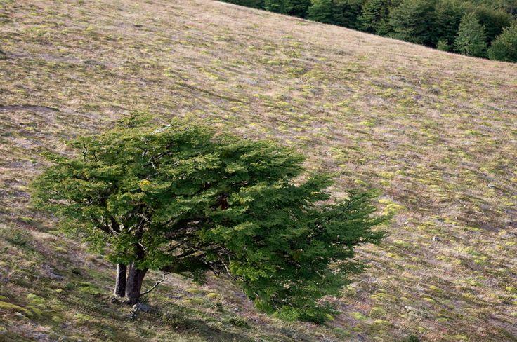 Karukinka!! lenga en paisaje de vegetación altoandina