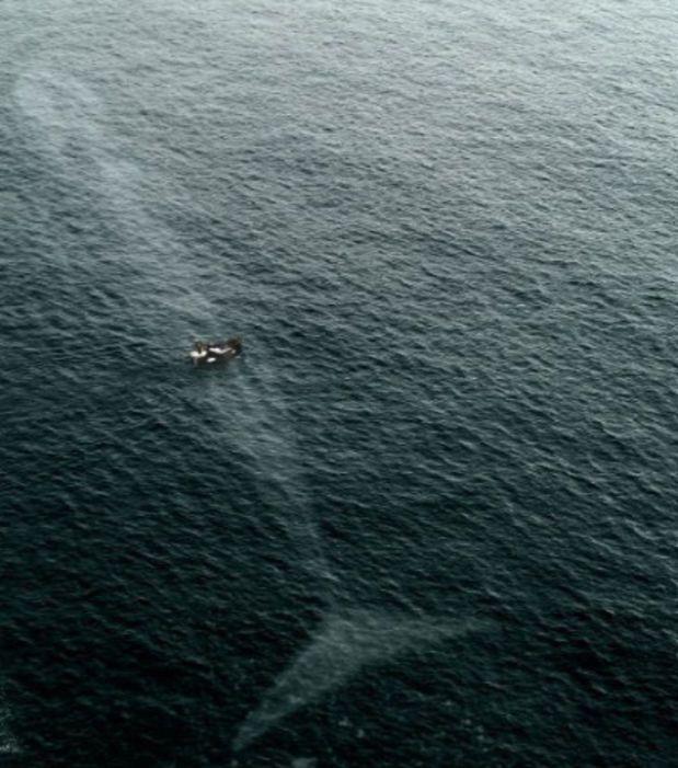 C'est un beau morceau cette baleine !