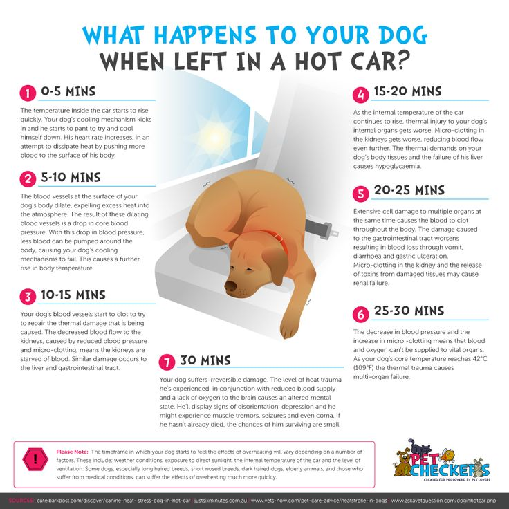What Happens to Your Dog When Left In a Hot Car?