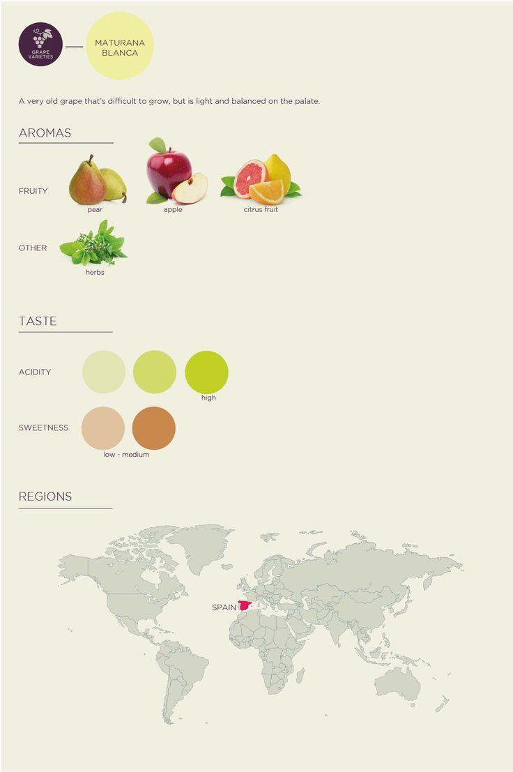 Learn About Wine: Maturana Blanca Grape
