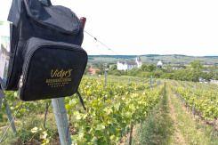 Urlaub mitten in den Weinbergen - im Saarland und dann noch den Luxus von 5 Sternen genießen. Das geht im Victor's Residenz Hotel Schloss Berg. :-)