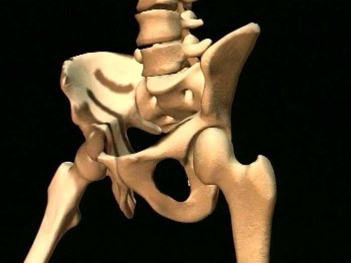 Het geraamte van je been bestaat uit dijbeen, knieschijf, kuitbeen en scheenbeen. Het dijbeen is het zwaarste bot. Bij een man ouder dan 18 jaar weegt dat bot ongeveer een kilo! In je voet zitten de voetwortel-beentjes, de middenvoetbeentjes en teenkootjes.