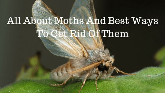 how to get rid of white moths in the garden