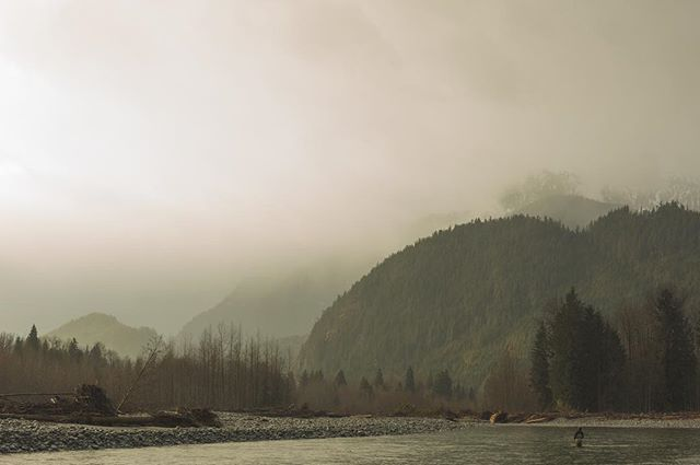 Moody afternoons on the water with some strange light. This is the place where the wild fish go come and see for yourself #theflyfishinglodge #flyfishing #gooutside #vancouver #explore #steelhead #salmon #catchandrelease