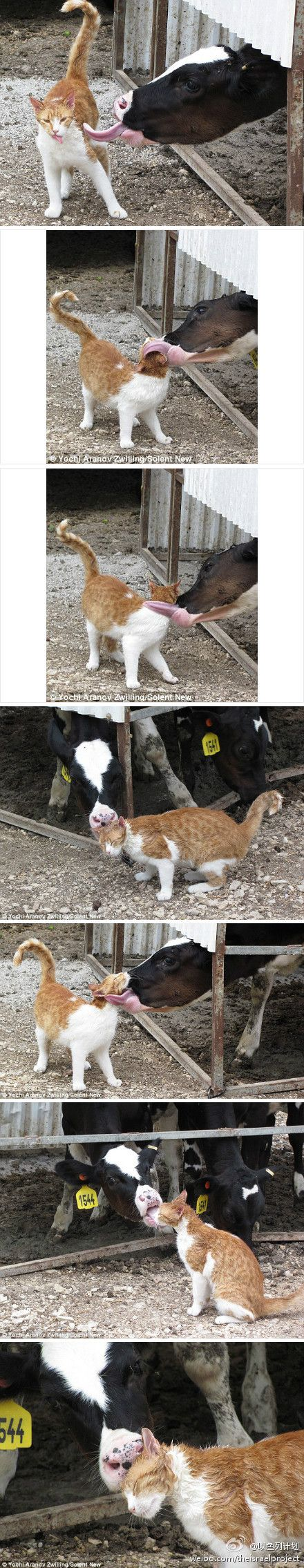 Farm friends....