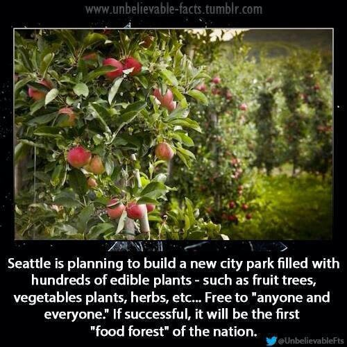 Seattle new city park? Cool
