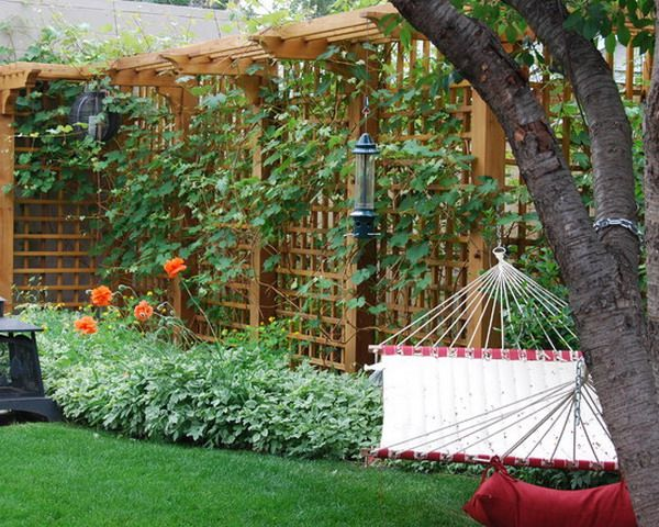 Trellis landscaping ideas pinterest for Trellis design ideas