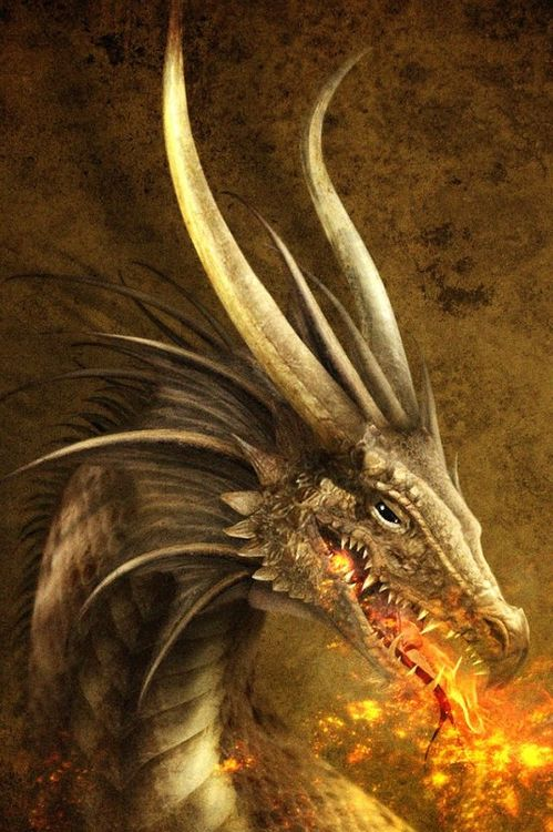 Image result for fire breathing dragons Pinterest