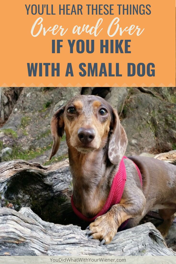 Top 10 Things You Hear When Hiking With A Small Dog Hiking Dogs