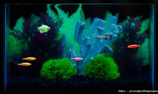 Build your own aquarium for How to make your own fish tank