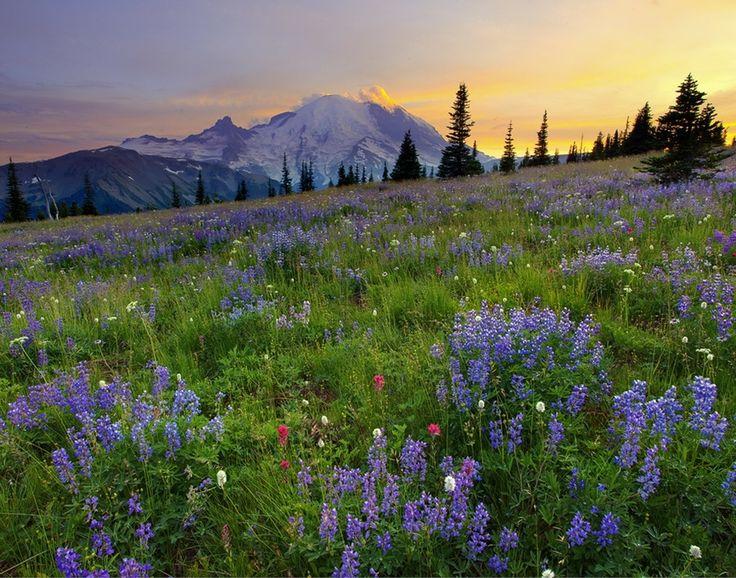 Mount_Rainier_National_Park_5