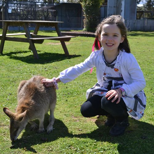Hunter Valley Zoo - hands on