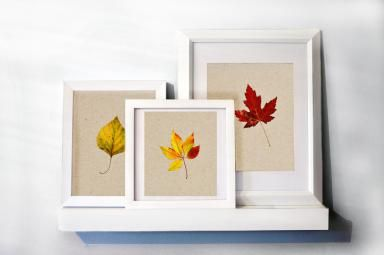 Decorating With Nature DIY Framed Leaves: DIY Framed Leaves