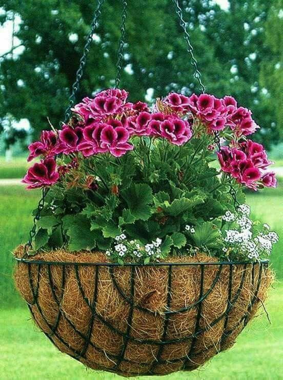 geranium hanging basket bottoms up