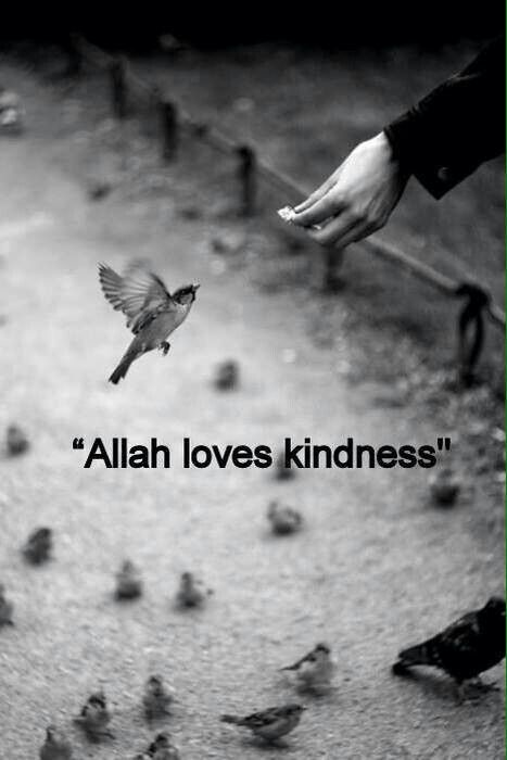 Allah loves kindness. Teach children to love what Allah loves :)