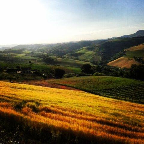 Visit Acquaviva Picena - Hills