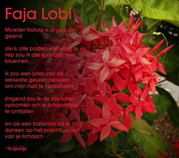 Faja-Lobi