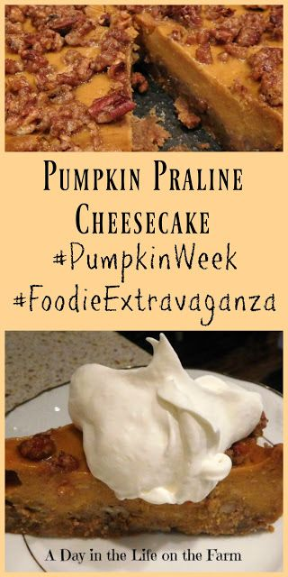 A Day in the Life on the Farm: Pumpkin Praline Cheesecake #PumpkinWeek meets #FoodieExtravaganza