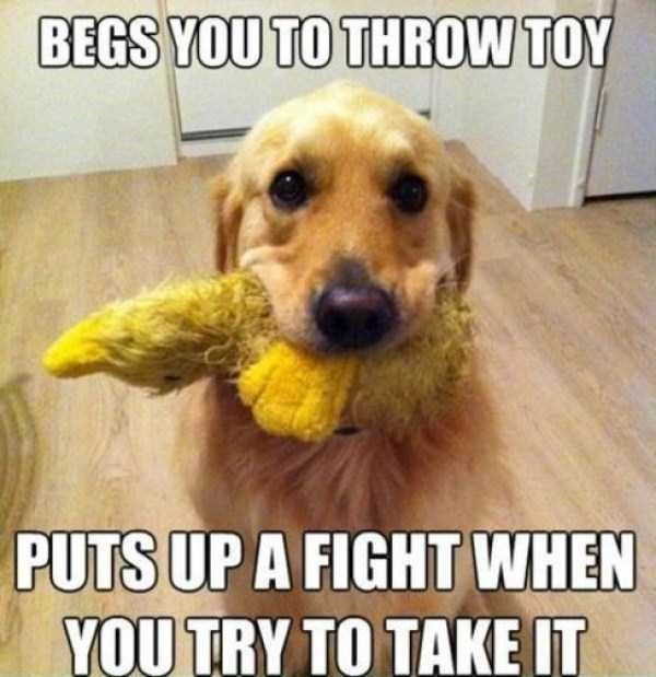 20 Funny Situations Taken Directly From Your Daily Life As A Dog Owner Funny Dog Memes Dog Logic Dog Memes