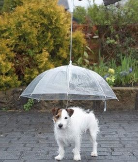 5 Tips to get your POOCH PEEING in the RAIN!