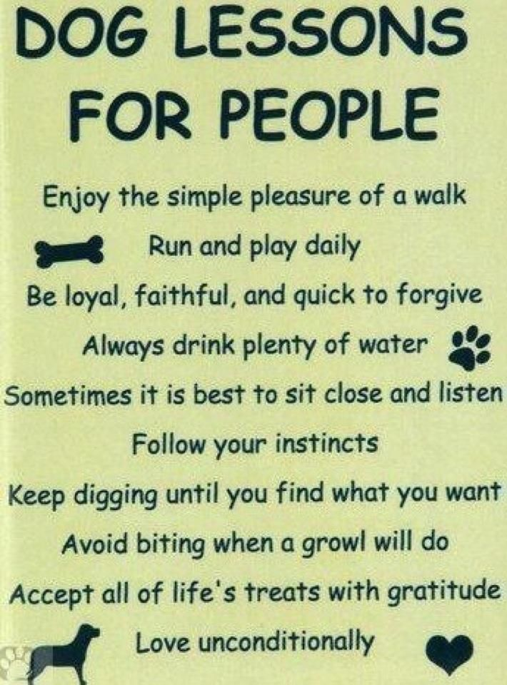 Dog Lessons for People- I love my doggies!
