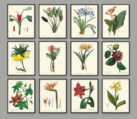 Botanical Tropical Flower Art Print SET of 12 Art by LoveThePrint