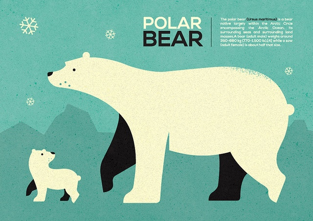 Polar bear infographic ... by Adam Quest, via Flickr