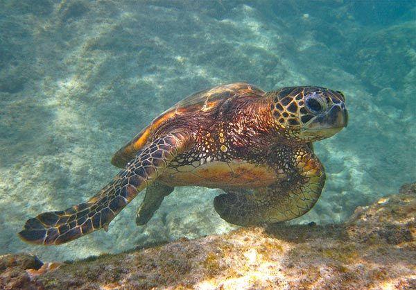 3 favorite snorkeling spots on the Big Island