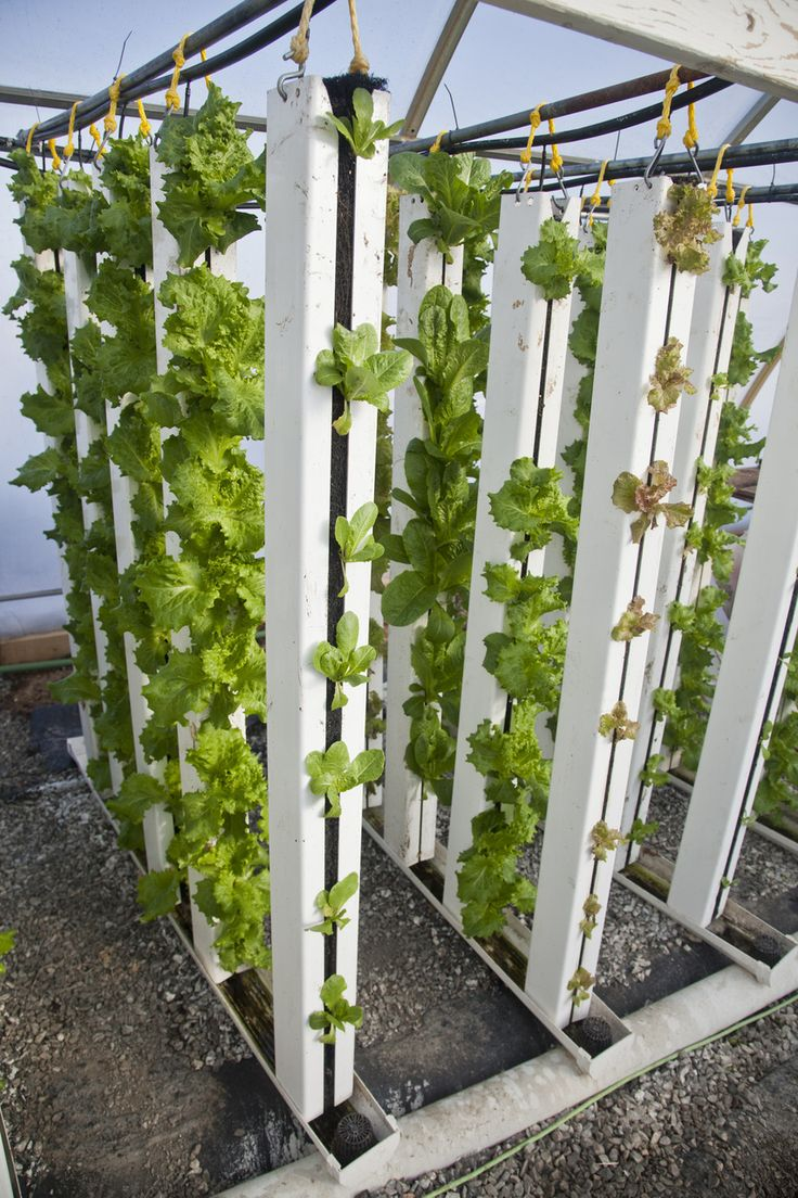 1000 Images About Aeroponics Tower Garden On Pinterest