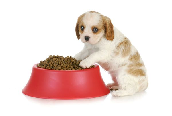 Weaning puppies is the process of switching puppies from their mothers' milk to solid food. Learn how and when to wean puppies: http://smallfluffydogbreeds.com/weaning-puppies-how-and-when-to-wean-puppies/