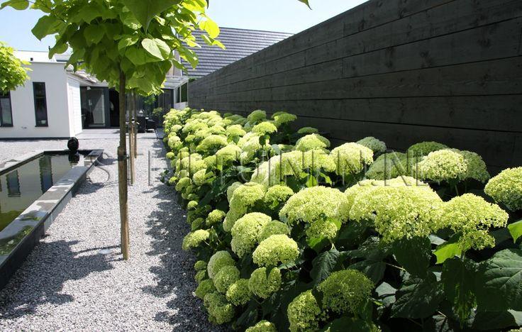 hortensia annabel strak split zwarte schutting tuin. Black Bedroom Furniture Sets. Home Design Ideas