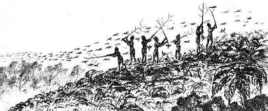 Maori catching godwits with tree branches, as the birds flew over the saddle at the Green Bay end of Whau portage. Godwits fly the short distance between the Waitemata and Manukau harbours daily to feed on the mudflats at low tide. The Ancient History of the Maori, 6 Volumes (Government Printer: Wellington), by J. White, 1887-1891. From Green Bay to Gondwanaland