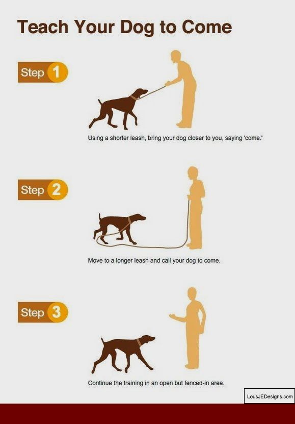How To Train A Dog From Stop Biting And Pics Of Best Way To Train