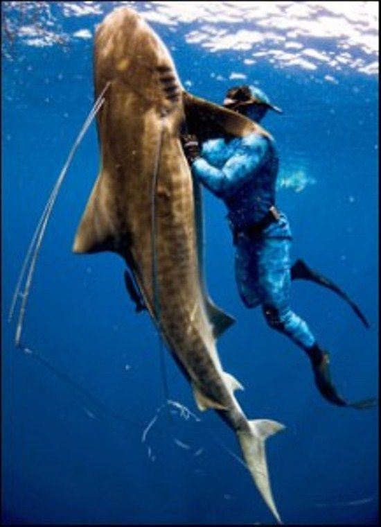 The 25 best spear fishing ideas on pinterest survival for Free fishing stuff