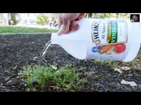 【충격】손상된 치아가 자연 치유한다 놀라운 새로운 발견! - YouTube