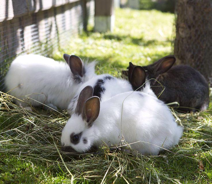 Kuschelige Hasen im Streichelzoo // Cuddly rabbits in the petting zoo