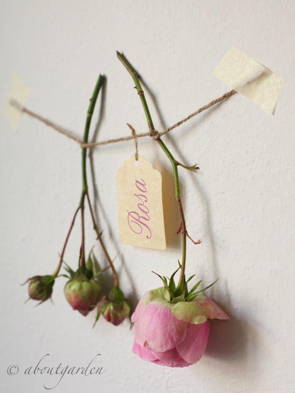rose ad essicare a mazzo appeso