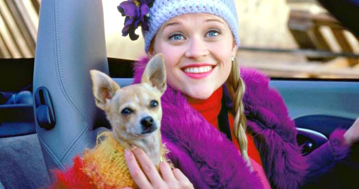 Reese Witherspoon's 'Legally Blonde' Dog Bruiser Passes Away -- Reese Witherspoon reveals on her Instagram page that the Chihuahua who played Elle Woods' pet Bruiser in 'Legally Blonde' has died at the age of 18. -- http://movieweb.com/legally-blonde-dog-bruiser-woods-moonie-dead-rip/