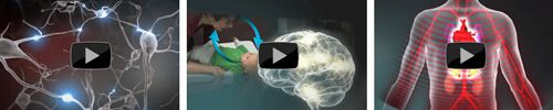 Center on the Developing Child at Harvard University - Early Brain Development and Stressors