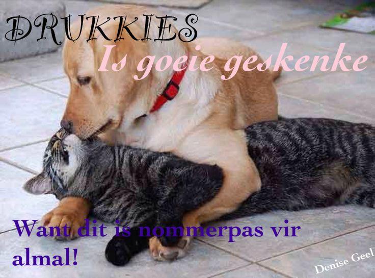 Drukkies Follow vir nog afrikaanse woorde, liedjies, se goed en bybelversies =)
