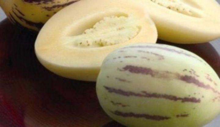 Pepino gold – převislé melouny, pěstování převislých melounů Pepino gold, pepino gold a jeho přihnojování, množení pepino gold.