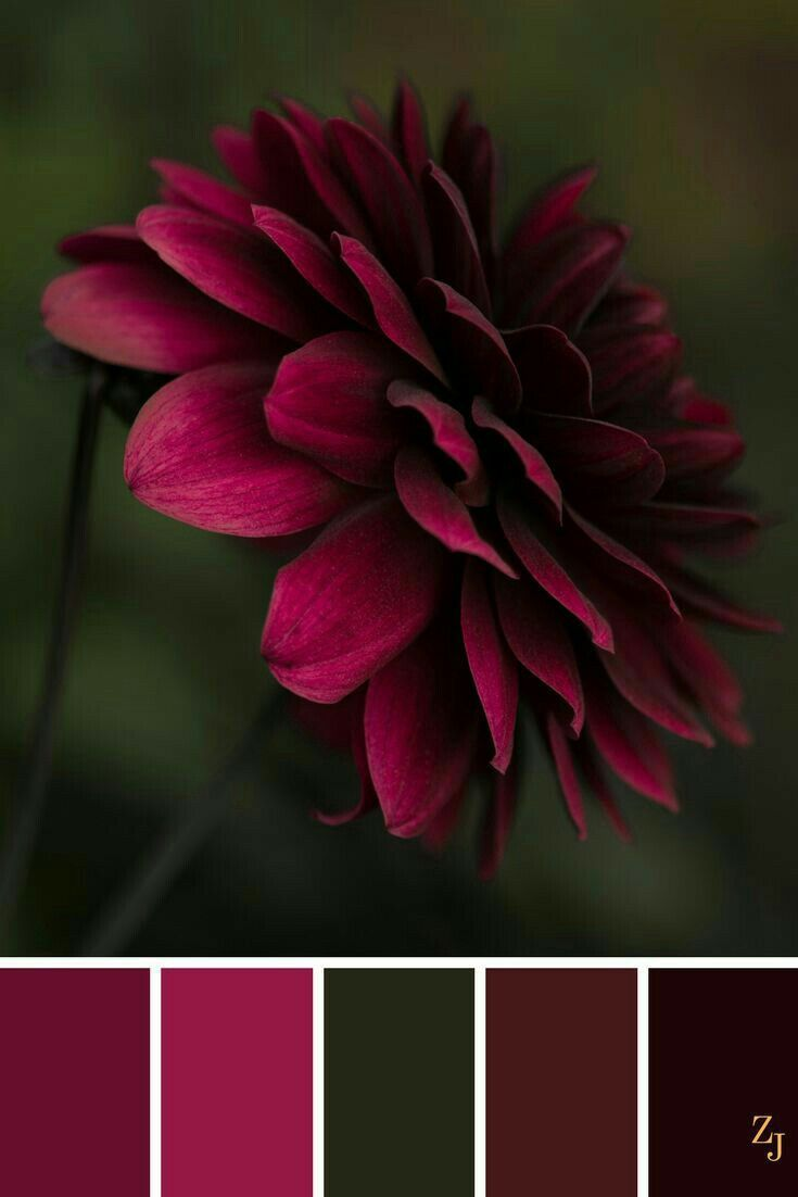 Color palette with a pop pink, red, burgundy on green and black.