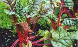 Warmoes of snijbiet heeft een hoog nitraatgehalte (zoals spinazie) en bevat veel vitamine C en ijzer.