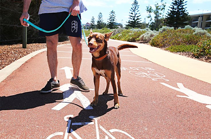There are loads of awesome walks and hikes in Perth, and even a few secret ones too, but the fellow dog owners out there will know all-too-well the guilt felt when heading out for a walk without their pooch.  Well, we're here to tell you there are many amazing dog-friendly walks in Perth that you probably haven't even heard of, and that you and your furry friend will love.  What are you waiting for? Pack some water, a few treats, the pup's lead and maybe their ball and head out on one of the…