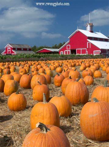 Pumpkin Patch and Barn at Faulkner Farm, Santa Paula, California; stock photography, picture of scenic barn; fall photos; americana fine art prints